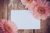 Gerberas and a blank white cardboard — Stock Photo