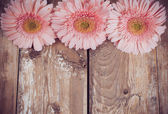 Pink gerberas on a wooden board — Stock Photo