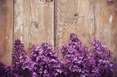 Květy pozadí — Stock fotografie