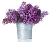Purple lilac isolated — Stock Photo