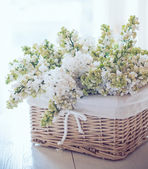 White lilac flowers in a wicker basket — Stock Photo
