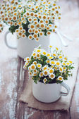 Vintage enamel mugs with chamomile — Stock Photo