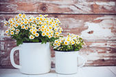 Enamel mugs with chamomile flowers — Stock Photo