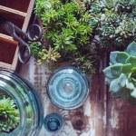 House plants — Stock Photo #49286873