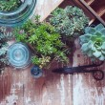 House plants — Stock Photo #49286967
