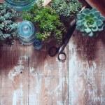 House plants — Stock Photo #49287057