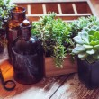 House plants and bottles — Stock Photo #49287091