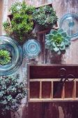 Комнатные растения — Стоковое фото