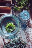 House plants — Zdjęcie stockowe