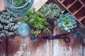 House plants — Stock Photo