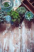 Kamerplanten — Stockfoto