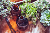 House plants and bottles — Stock Photo