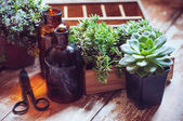 House plants and bottles — Foto de Stock