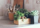 Suculentas em uma caixa de madeira — Fotografia Stock