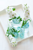Matthiola flowers  — Stock Photo