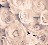 Beige roses — Stock Photo
