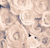 Beige roses — Stock Photo