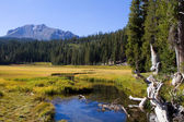 Lassen Mountain Stream — Stock Photo