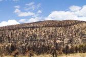 Burned Hillside — Stock Photo