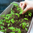 Seedlings in female hands — Stock Photo #18755071