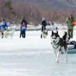 Foto Stock: Mushing at Baikal Fishing 2012