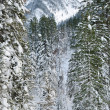 Winter wild forest — Stockfoto