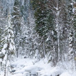 Winter taiga forest stream — Stock Photo