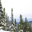 Stock Photo: Winter mountain forest near Baikal
