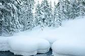Winter wild forest — Stock Photo