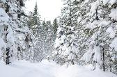 Kış vahşi orman — Stok fotoğraf
