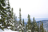 Winter mountain forest near Baikal — Stock Photo