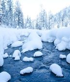Forest stream in winter — Stock Photo