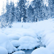 Winter forest stream — Stock Photo