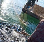 Balık tutma — Stok fotoğraf