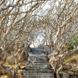 Stone stairs among crooked trees — Stock Photo