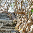 Stone stairs among crooked trees — Photo