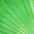 Royalty-Free Stock Photo: Palm leaf, background