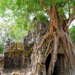 Banyan rooting in Angkor - Stock Photo