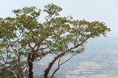 Branchy tree — Stock Photo