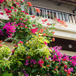 Flowers on house wall — Stock Photo