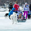 Mushing on husky dogs at Baikal Fishing 2012 — Stock Photo