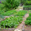 Vegetable garden — Stock Photo
