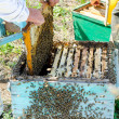 Stock Photo: Beekeepers at work