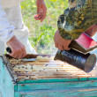 Beekeepers at work — Stock Photo #29463801