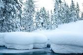 Wilden Winterwald — Stockfoto
