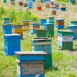 Stock Photo: Siberibee garden