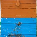 Bienenstock — Stockfoto