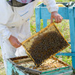 Beekeeper at work — Stock Photo #29957327