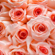 Lots of roses background — Stock Photo