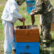 Beekeepers at work — Stock Photo #34261745